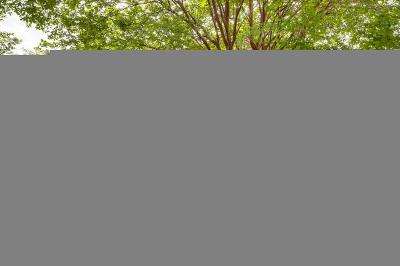 San Antonio Single Family Home New: 10130 Sandbrook Hill