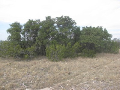 Residential Lots & Land For Sale: 2956 Caden Lane