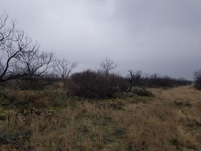 San Angelo Residential Lots & Land For Sale: 4574 Grey Wolf Lane