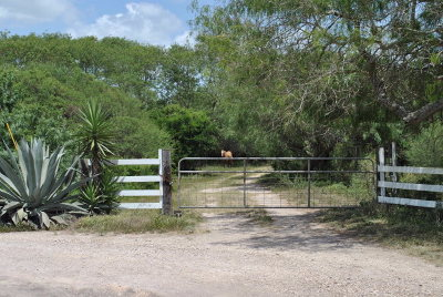 Los Fresnos, Bayview Residential Lots & Land For Sale: 1 W Resaca