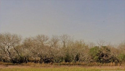 Los Fresnos, Bayview Residential Lots & Land For Sale: Fm 2480