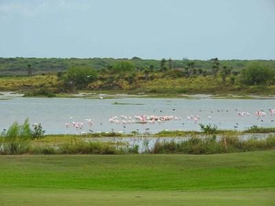 Laguna Vista Residential Lots & Land For Sale: 36 Laguna Madre Dr.