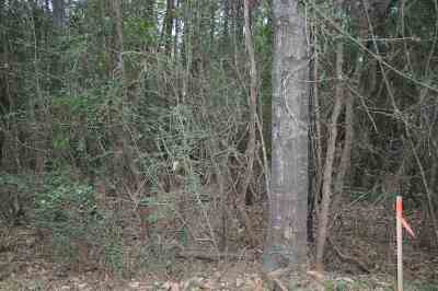 Kirbyville Residential Lots & Land For Sale: County Road 534 #County R