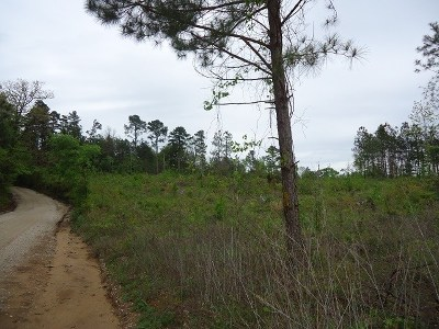 Residential Lots & Land For Sale: 6000 Cr 203