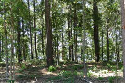 Burkeville, Hemphill, Hemphill Sub-division, Milam, Shelbyville Residential Lots & Land For Sale: 232 Cypress Royale W