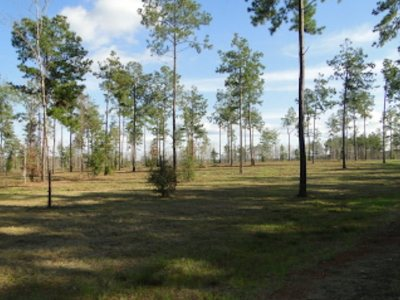 Residential Lots & Land For Sale: 227 Spanish Trail