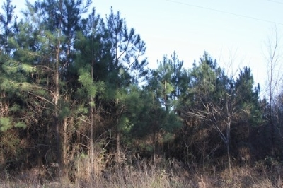 Burkeville Residential Lots & Land For Sale: Co. Rd. 2139
