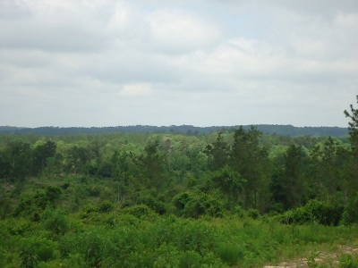 Residential Lots & Land For Sale: 368 Fm 3017