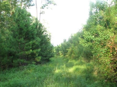 Residential Lots & Land For Sale: Off Hwy 190 W