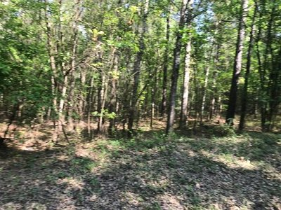 Jasper Residential Lots & Land For Sale: 80.6 Acres Cr 20