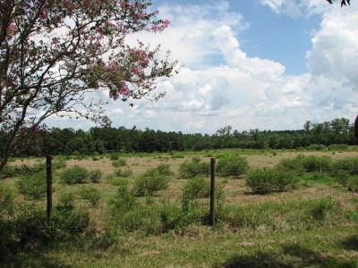 Newton Residential Lots & Land For Sale: Co. Rd. 3031