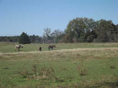 Angelina County, Jasper County, Nacogdoches County, Newton County, Sabine County, San Augustine County, Shelby County Farm & Ranch For Sale: 1803 Cr 3046