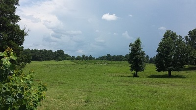 Angelina County, Jasper County, Nacogdoches County, Newton County, Sabine County, San Augustine County, Shelby County Residential Lots & Land For Sale: 6979.1 Hwy. 84