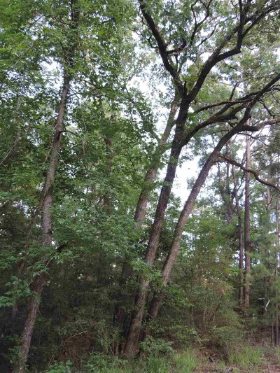 Etoile Residential Lots & Land For Sale: Hickory