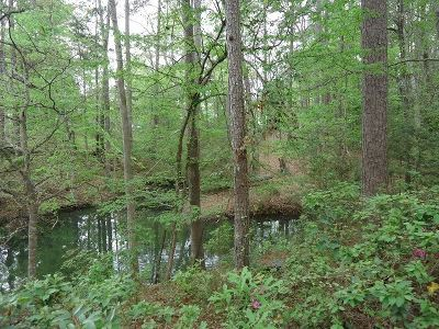 Bon Weir, Bon Wier, Burkeville, Wiergate, Hemphill, Milam, Shelbyvile, Shelbyville Residential Lots & Land For Sale: 160 Dogwood