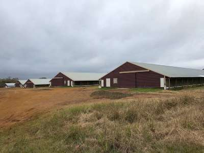 Angelina County, Jasper County, Nacogdoches County, Newton County, Sabine County, San Augustine County, Shelby County Farm & Ranch For Sale: 1710 Fm 2261