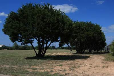 Crawford Residential Lots & Land For Sale: Twisted Oak Lane