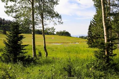 Residential Lots & Land For Sale: 268 White Pine Canyon Road