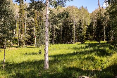 Residential Lots & Land For Sale: 273 White Pine Canyon Road