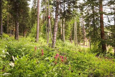 Residential Lots & Land For Sale: 301 White Pine Canyon Road