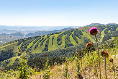 Park City Residential Lots & Land For Sale: 238 White Pine Canyon Road