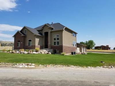 Willard Single Family Home For Sale: 777 W 7950 S