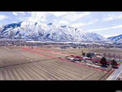 Mapleton Single Family Home For Sale: 1095 S 800 W