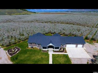 Santaquin Single Family Home For Sale: 6742 W Lark Rd