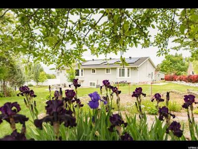 Pleasant Grove Single Family Home For Sale: 1368 E 330 N