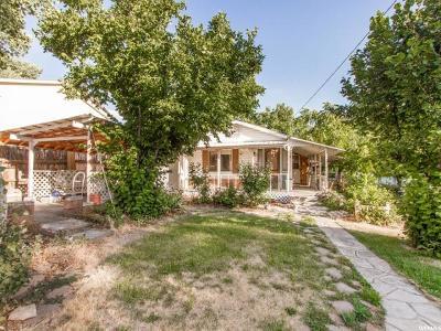 Pleasant Grove Single Family Home For Sale: 450 E 100 N
