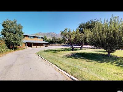 Pleasant Grove Single Family Home For Sale: 455 E 500 S