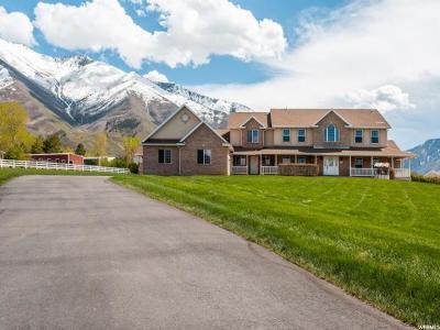 Mapleton Single Family Home For Sale: 346 E 900 S