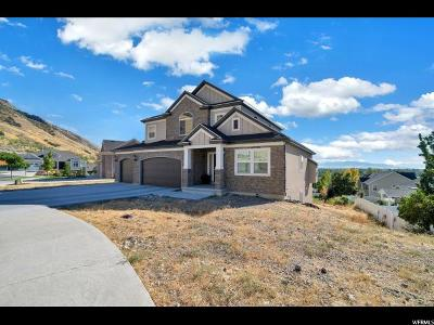 Provo Single Family Home For Sale: 667 N 1410 E