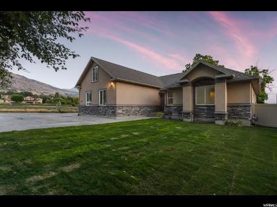 Pleasant Grove Single Family Home For Sale: 790 E 100 S