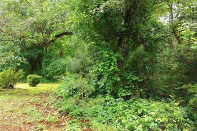 Amelia County Land For Sale: 2.3 Acres, Paradise Lane