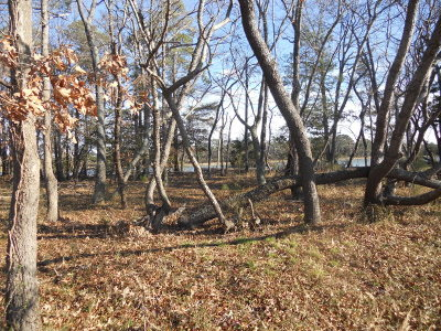 Cape Charles Residential Lots & Land For Sale: 118 Creekside Ln