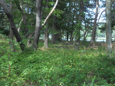 Cape Charles Residential Lots & Land For Sale: 75 Creekside Ln