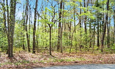 Greenbackville, Horntown Residential Lots & Land For Sale: 2482 Stern Ct