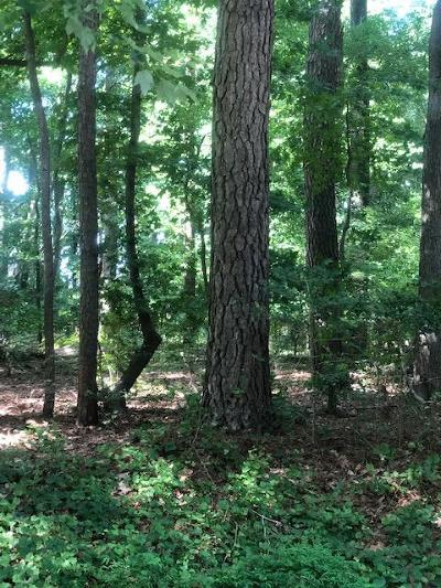 Residential Lots & Land For Sale: 124 Raider Ct