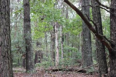 Residential Lots & Land For Sale: 288 Flying Dutchman