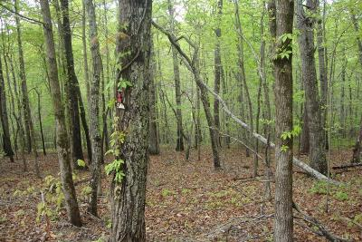 Huddleston VA Residential Lots & Land For Sale: $40,000