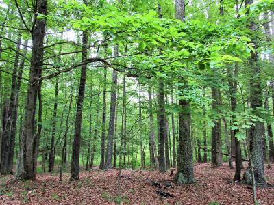 Residential Lots & Land For Sale: Winesap