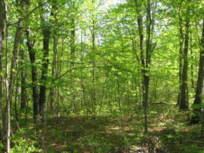 Elkton Lots & Land For Sale: Lot 2 Long Bow Acres