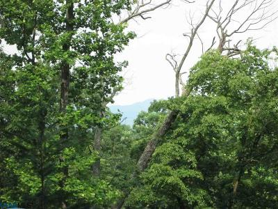 Lots & Land For Sale: Lot 43 Tree House Pl