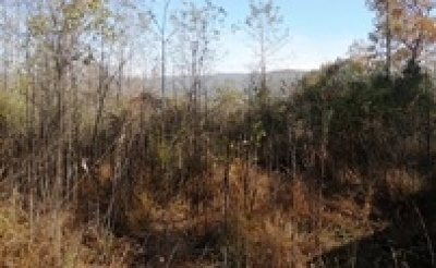 Lots & Land For Sale