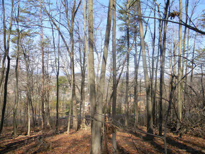 Harrisonburg Lots & Land For Sale: 2261 Pearl Ln