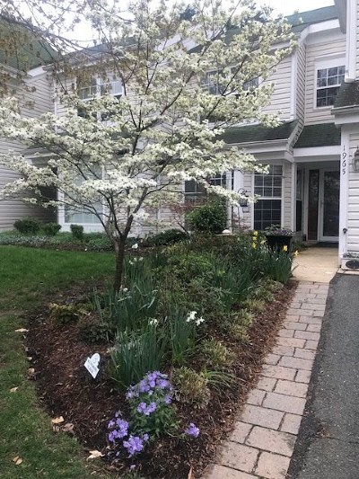 Townhome For Sale: 1965 Arbor Ct
