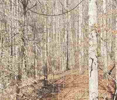 Buckingham County Lots & Land For Sale: 10 B-A-H Rd