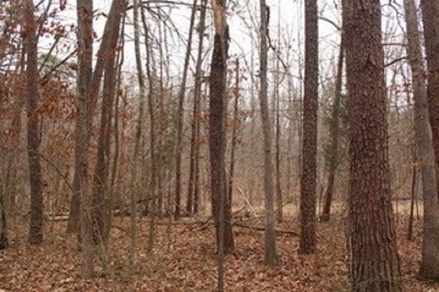Fluvanna County Lots & Land For Sale: Richmond Rd