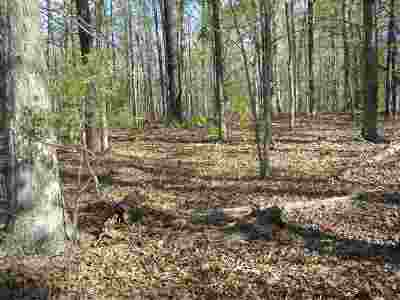 Fluvanna County Lots & Land For Sale: Gravel Hill Rd
